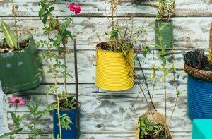 plants in repurposed planters